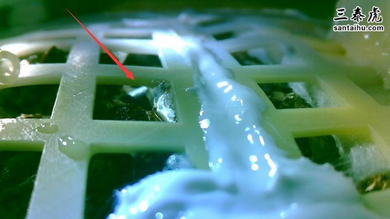 月球植物发芽,棉花种子发芽