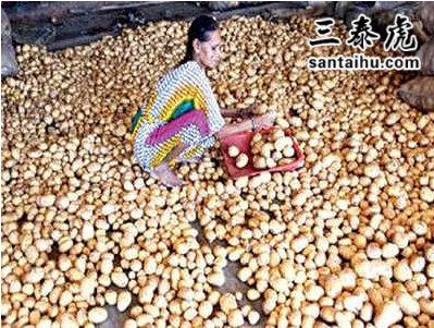 开元棋牌APP农民种植的土豆